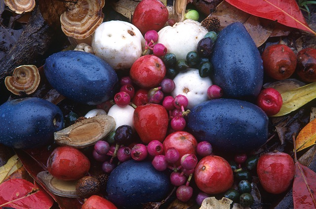 Rainforest Fruit in Spa Treatments