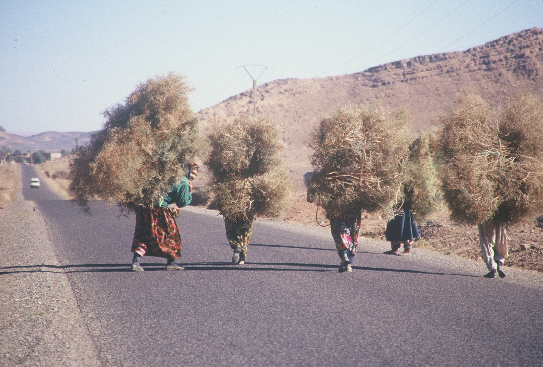 7 Hay Carriers Morocco