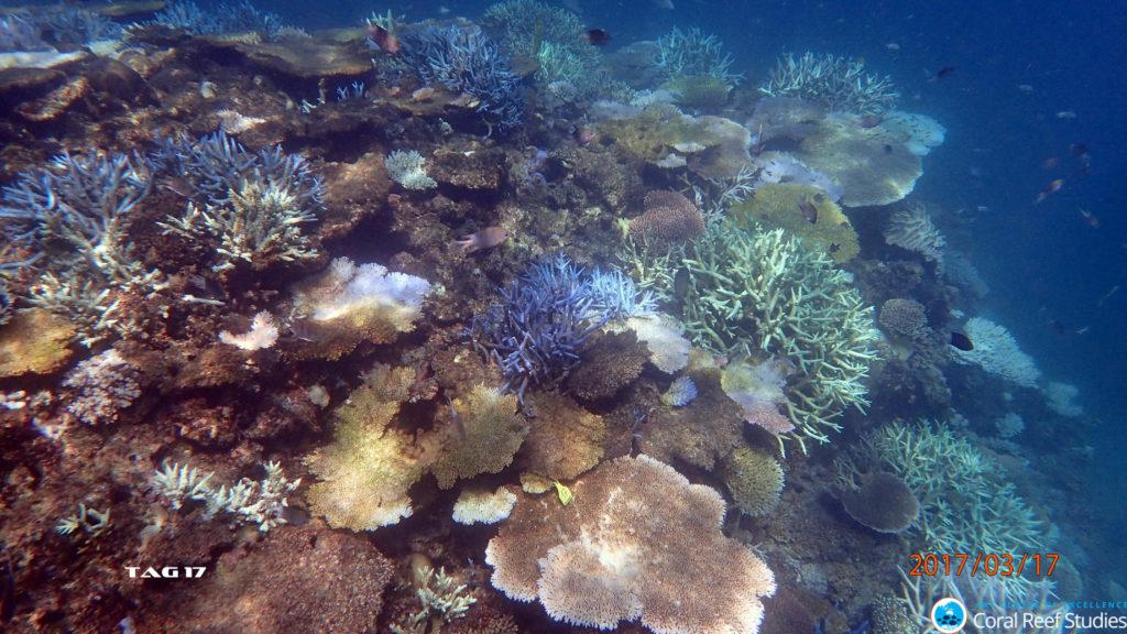 Bleached Coral Beaver Reef. Credit: Kerryn Bell